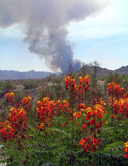 Gila River Ethan Wildfire 6-28-08