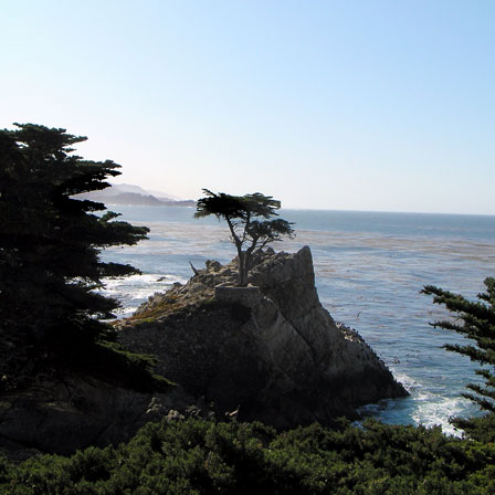 Lone-Cypress-square-crop