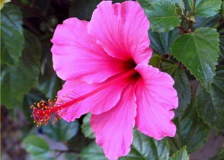 Hibiscus-front-entry2-4-19