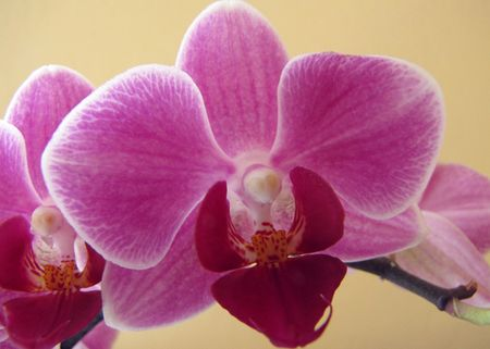 T-joes-orchid#1-8-11