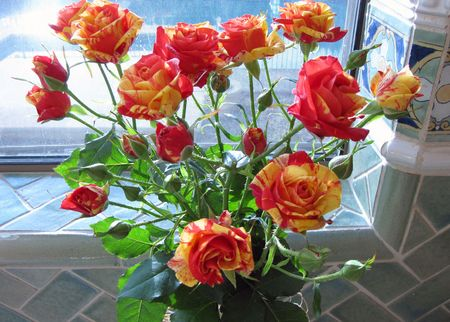 Grocery-store-roses-2-26.5