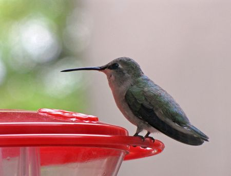 10-20-tmw-female-hummer-fro