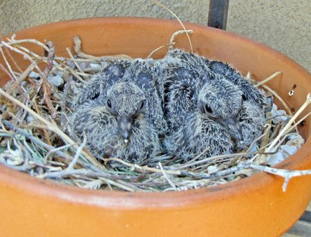 Dove-babies-front-5-8