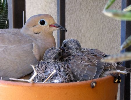 Dove-babies-front-5-11