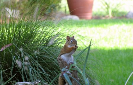 10-9-squirrel-at-M&MBs