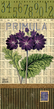 Purpleprimula1mixed6x12