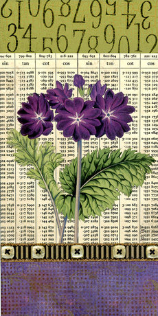 Purpleprimula2mixed6x12_2