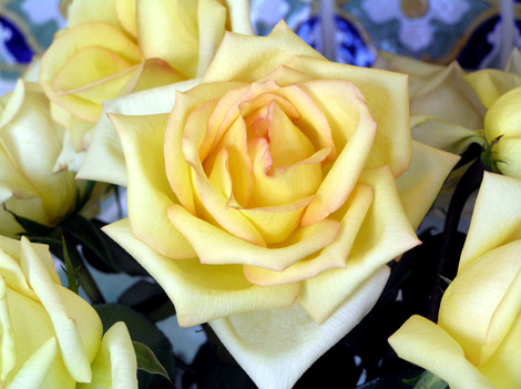 Mothers_day_roses_2